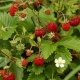 Flower Tour and Wild Strawberries.