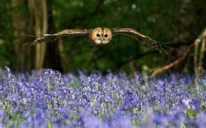 bluebells_Bird