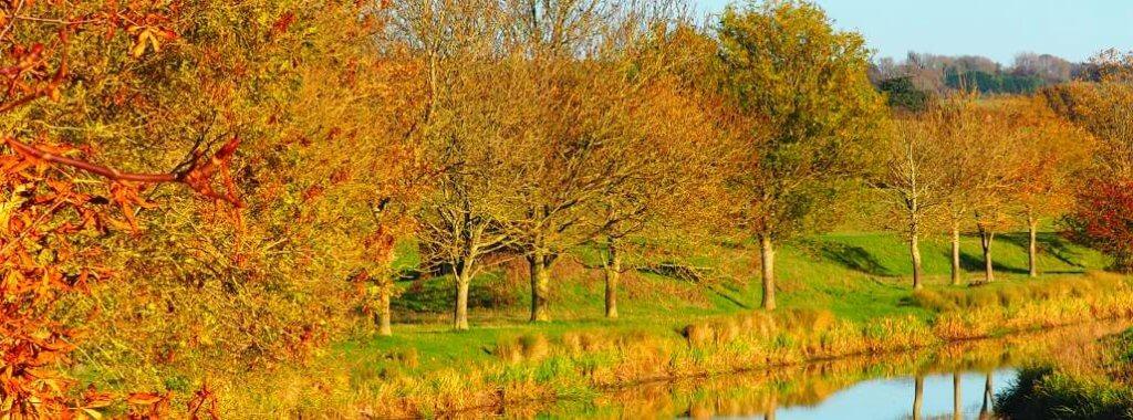 trossachs wooded glen
